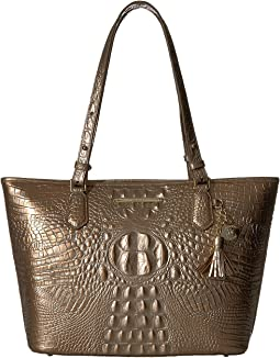 Brahmin Medium Asher