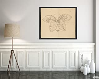 1910 Map World no. 245 Cahill Butterfly Projection Butterfly Projection|Vintage Fine Art Reproduction|Ready to Frame