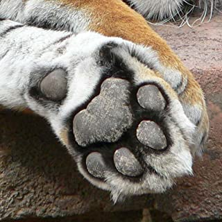Animal Paws and Claws 2