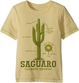 PEEK - Cactus Tee (Toddler/Little Kids/Big Kids)