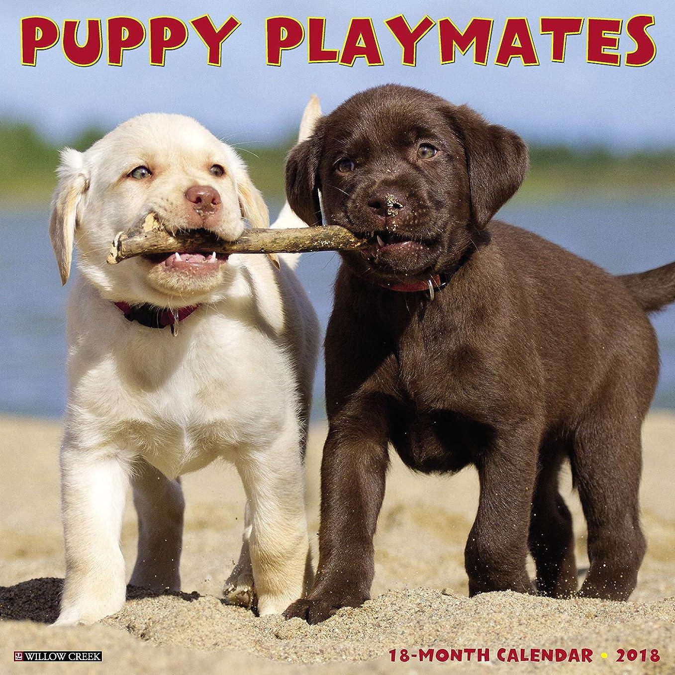 ピアノを弾く宣教師ミンチPuppy Playmates 2018 Calendar