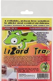 DPK Lizard Trap, Multicolour