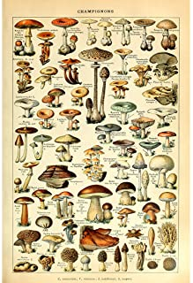 Meishe Art Vintage Poster Print Mushrooms Champignons Identification Reference Chart Diagram Illustration Botanical Educational Wall Decor