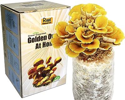 Root Mushroom Farm Golden Oyster Mushroom
