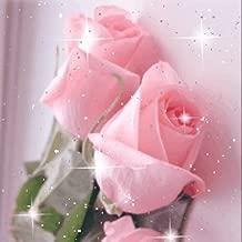 Beautiful Roses Live Wallpaper Flowers