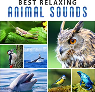 Best Relaxing Animal Sounds: Whale Sounds, Singing Birds, Croaking Frogs, Screeching Dolphins, Tapping Woodpecker, Hooting Owls, Crickets Chirping