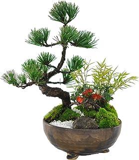 盆栽妙 モダン松竹梅 5号 樹高20cm×幅20cm 縁起の良い お正月 プレゼント お祝い 開店祝い