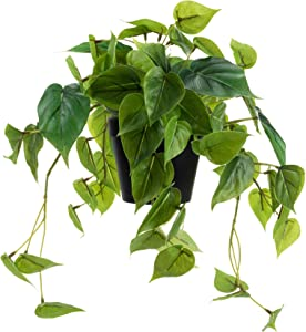 LuckyGreenery Artificial Scindapsus Aureus, Realistic Fake Plant with Plastic Pot for Home Office Garden Decoration(8in H)
