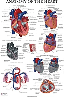Sponsored Ad - Heart Anatomy Poster - Laminated - Anatomical Chart of The Human Heart - 18