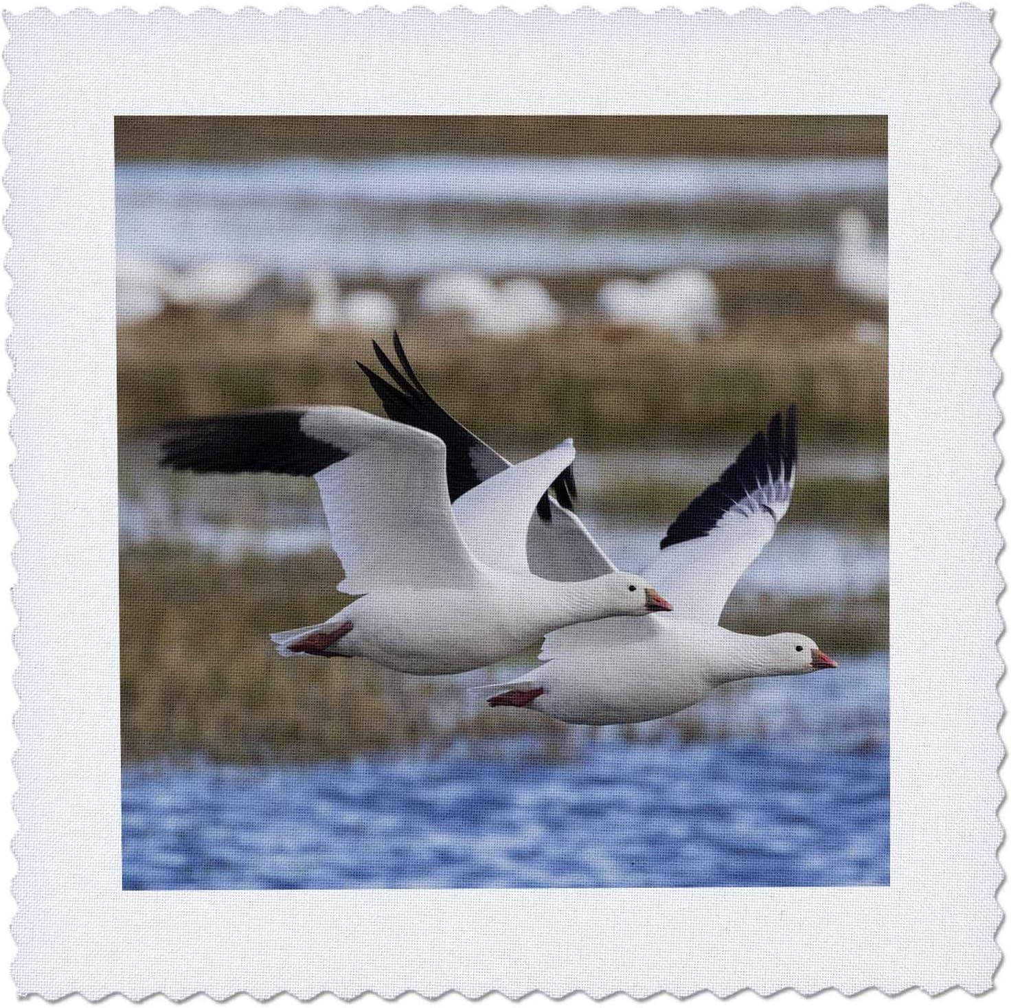Max 77% OFF 3dRose Danita Delimont - Geese Squares 5 popular pair Ross Quilt geese