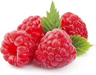 Giant Fruit Sweet Tulameen Raspberry 25 Seeds - Red Everbearing Raspberry Seeds, Heritage Raspberry Seeds, Organic Thornless Raspberry Seeds for Planting