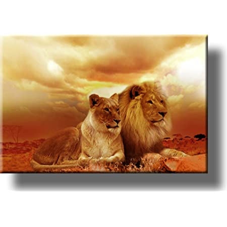 Amazon Com Lion And Lioness Picture On Stretched Canvas Wall Art Décor Ready To Hang Posters Prints