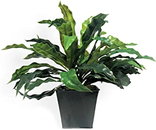 WHW Whole House Worlds Realistic Hosta Faux Petite Potted Plant, Realistic Leaves and Stems, Square Black Pot, Approx. 15 Diameter x 9 Tall Inches