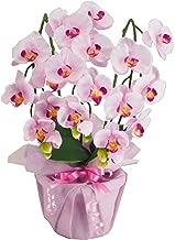 神戸花物語(Kobe Flower Story) 胡蝶蘭 cotyoran-mini-lv 本体: 高さ43cm 本体: 幅28cm