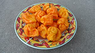 Yellow Moruga Scorpion 6 Dried Peppers