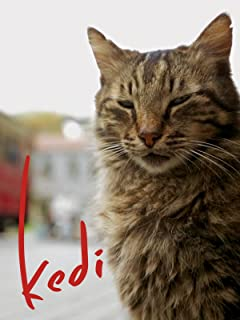 Best istanbul cats kedi Reviews