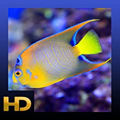 Colorful Aquariums SFX Ambience Tropical fish Sleep timer
