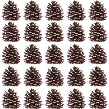 Piñas Naturales para Decoración Navideña - 1 kg (50 Unidades ...