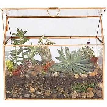 """Deco Glass Terrarium, Succulent, Air Plant (Large 9.8"""" x 6"""" x 8"""")"""