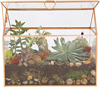 Deco Glass Terrarium, Succulent, Air Plant (Large 9.8