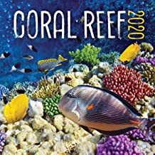 Turner Licensing Turner Photo Coral Reef 2020 12X12 Photo Wall Calendar (20998940016)