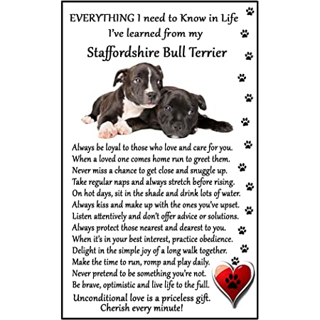 STAFFIE STAFFORDSHIRE BULL TERRIER Property Laws Magnet Personalized