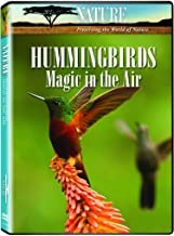 Best hummingbirds magic in the air Reviews