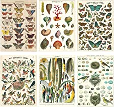 French Nature Vintage Style Poster Set of 6 Decorative Paper 20 x 28