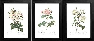 Best botanical rose prints Reviews