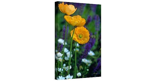 36 by 24-Inch ArtWall Kathy Yates La Playa Poppies Gallery Wrapped Canvas Art
