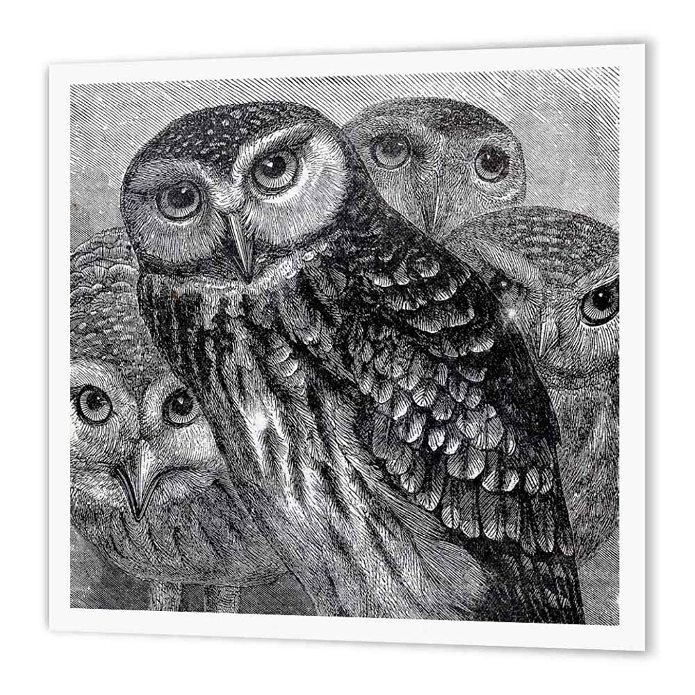 3dRose ht_151439_2 Group of Owls-Black and White Engraving Etching-Fine Art Birds-Iron on Heat Transfer for White Material, 6 by 6-Inch