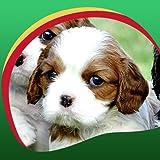 Fonds d'écran Live Cute Puppies