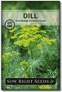 Sow Right Seeds - Dill Seed for Planting - All Non-GMO Heirloom Dill Seeds with Full Instructions for Easy Planting and Gr...