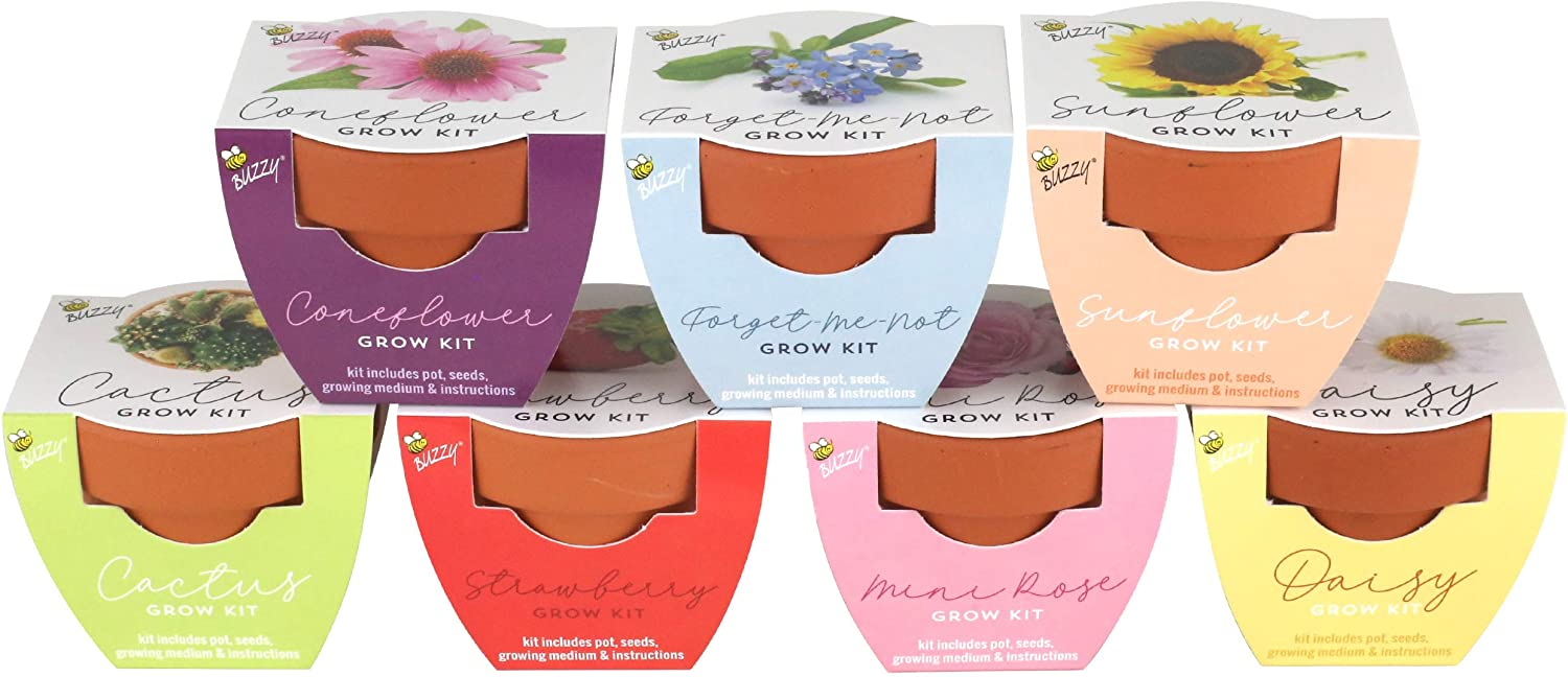 BUZZY Terracotta Mini Grow Pots Col San Diego Max 63% OFF Mall Assorted 12-Pack Classic