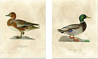 Vintage Nature Print - Antique Ducks - Gallery Wall Decor Art Print 8 x 10 Unframed (Set of 2)