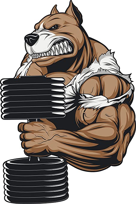 Two Bodybuilding Pitbull Dog Weights Muscle Gym Printed Vinyl Decal Stickers BB6