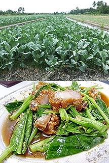 Organic (1500 Seeds) Kai lan-Gai lan-Chinese Broccoli-kale-Kailaan no GMO Vegetable Seeds + Free Thai Food Recipe