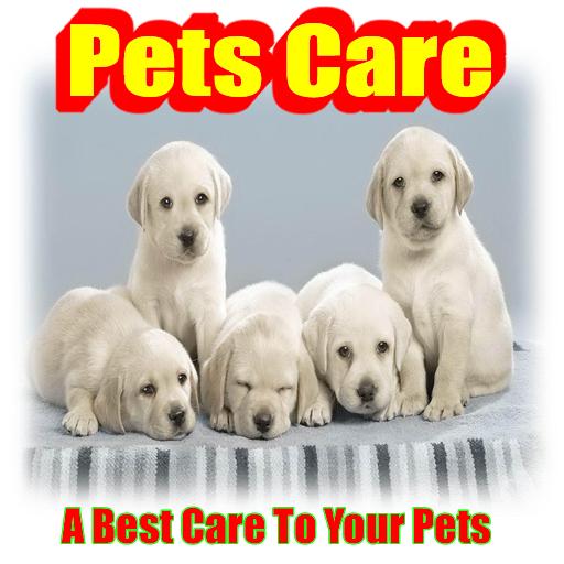 Bird Pet Care
