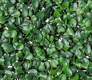 Artificial Topiary Hedge Plant Privacy Fence Screen Panels for Both Outdoor or Indoor, Garden or Backyard Decorations (12 PC Pack, 20x20 inch Artificial DarkGreenBoxwood hedge, 12PC)