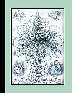 Vintage botanical illustration Journal: Ernst Haeckel - Siphonophorae patterns - The large botanical journal for the marin...