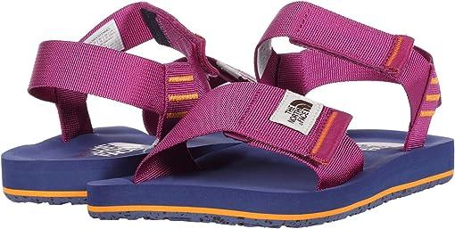 Wild Aster Purple/Bright Navy
