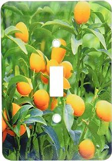 3dRose lsp_83504_1 Kumquat 水果树,Agriculture Na01 Pri0002 Prisma 单拨动开关