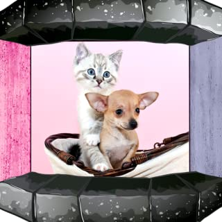 Dog & Cats Ringtones