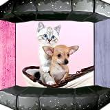 Canciones de perro y gatos
