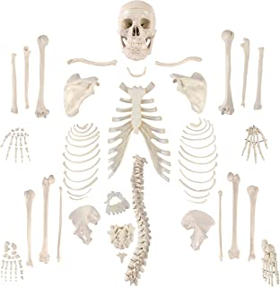 """Houseables Disarticulated Human Skeleton, Full Anatomical Model, Life Sized, 62"""" Height, Plastic, with Poster, Skull, Bones, Articulated Hand & Foot, for Study of Skeletal System, Educational"""