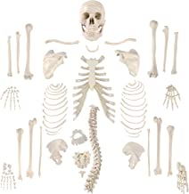 articulated and disarticulated bones