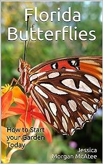 Florida Butterflies: How to Start your Garden Today