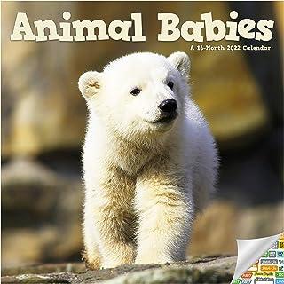 Animal Babies Calendar 2022 -- Deluxe 2022 Baby Animals Wall Calendar Bundle with Over 100 Calendar Stickers (Animal Babie...