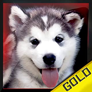 Small Dog Beauty and Agility Contest : The cutest animal race - Gold Edition