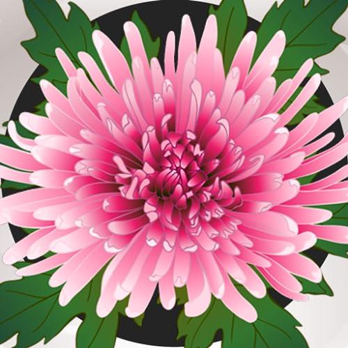 Chrysantheme-Fotocollage